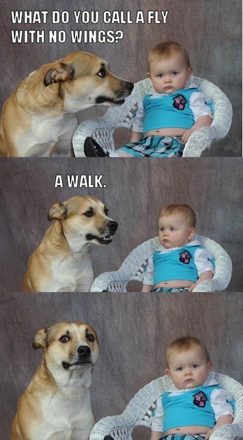 funny photo memes