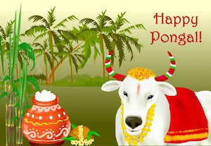 pongal cow images